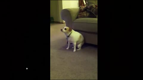 Dog Funny Video Best Coub Compilation Part 1 [ HD 720]