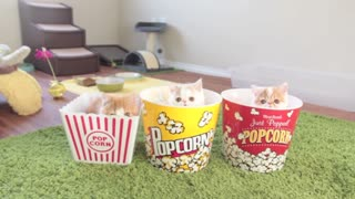 Caramel Popcorn Kittens – Cuteness Overload! - Video