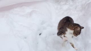 Cute kitten absolutely loves to play in the snow - Video