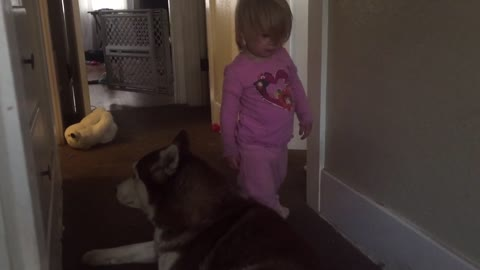 Sweet toddler caught snuggling her Siberian Husky