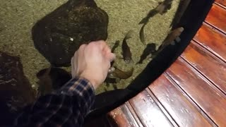 Clever Way To Get Fish To Come To You  - Video