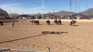Western Pleasure Trainers Compete In A Ride Backward Race - Video