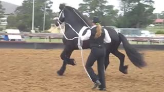Is This The Most Beautiful Horse In The World - Video