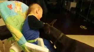 Doberman makes ticklish baby laugh hysterically