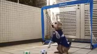 Goalkeeper has become a dog - Video