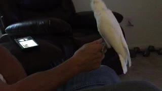 Peaches The Cockatoo Breaks It Down