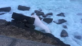 Dead whale washes up in Portugal - Video