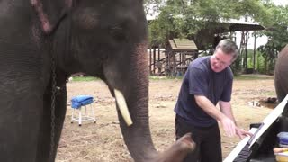 Piano duet with Peter the Elephant in Thailand - Video