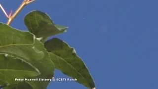 UFO over ECETI Ranch - 29th of Sep 2018