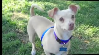 Super sweet dog - Video