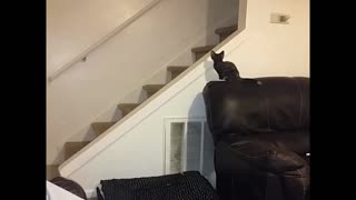 Cat slides down a railing