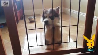 Funny Dogs - A Funny Dog Videos Compilation 2017 - Video