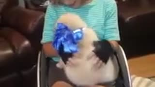 Surprise service puppy sends mom into tears on her birthday - Video