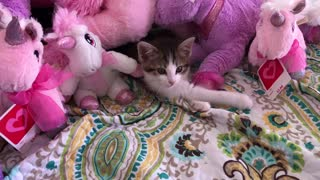 Unicorn teddy bears   And the cat cute - Video