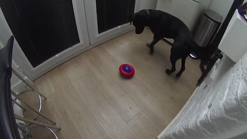 Hank Gets a New Toy