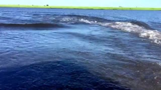 Huge Hippo Charges After Safari Speedboat  - Video