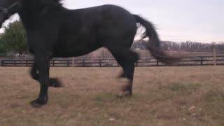 Draft Horse Rescue - Video