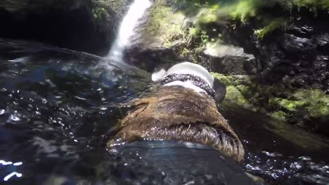 Dog swimming towards waterfall