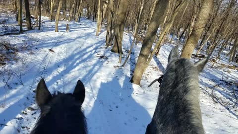 View from the back of a horse on the trail