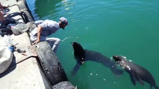 Kiss from a seal  - Video