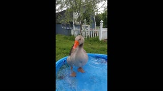 """Goose does a """"happy dance"""" upon owner's arrival"""
