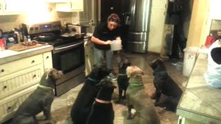 "4 year old feeding six pit bulls ""owner"" - Video"