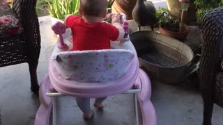 baby buggy races - Video