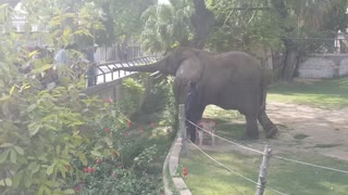 A beautiful view of Lahore zoo  - Video