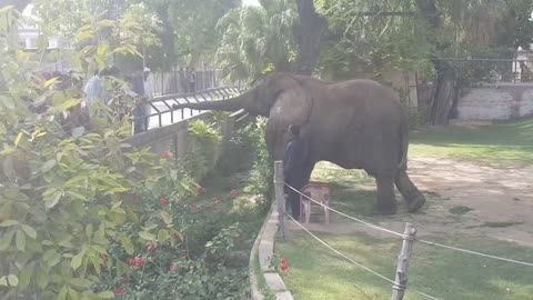 A beautiful view of Lahore zoo