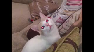 Spooky cat is watching you - Video