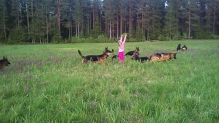 Little girl plays with 14 German Shepherds - Video