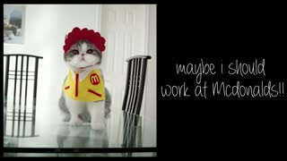 Cat loves to eat McDonald's - Video