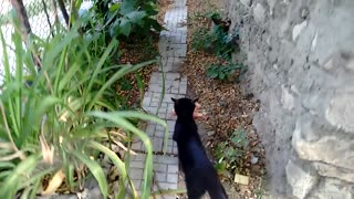 Kittens Getting Lunch - Video