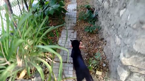 Kittens Getting Lunch