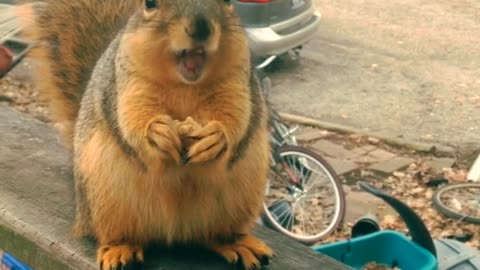 Prepare To Have A Good Laugh When You Hear This Babbling Squirrel