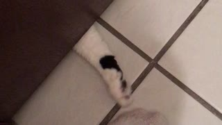 I Just Want to Poop in Peace... - Video