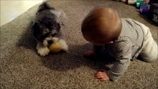 Puppy plays fetch with baby - Video