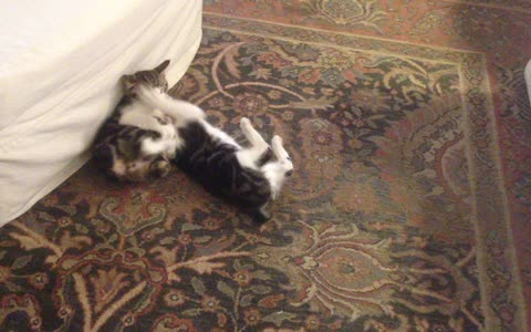 Pair of kittens engage in the most adorable play-fight ever