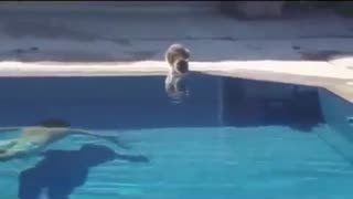 Funny Animals - Video