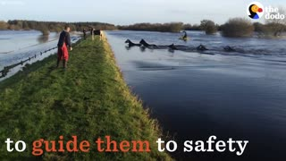 Horses (VIDEO) Must See: Rescuers Jump In To Save Horses Stranded On Island! - Video