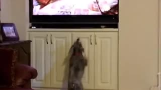 Dog jumps after seeing other animals on TV
