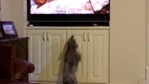 Dog jumps after seeing other animals on TV - Video