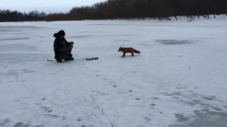 Fisherman Feeds Fox - Video