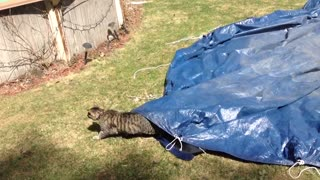 Cat narrowly escapes tarp - Video
