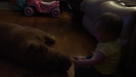 Dog licking baby results in hysterical laughter