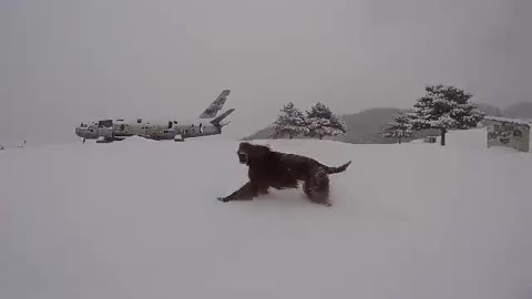 Dog completely loses his mind following epic snowfall