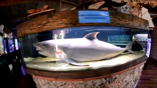 Marine aquarium in Split, Croatia - Video