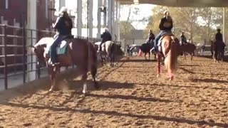 Looking For The Best Solution For Western Pleasure Horses - Video