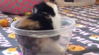 Funny cats in the house - Video
