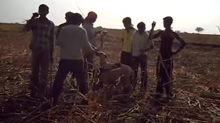 dogs hunting rabbits in india  - Video